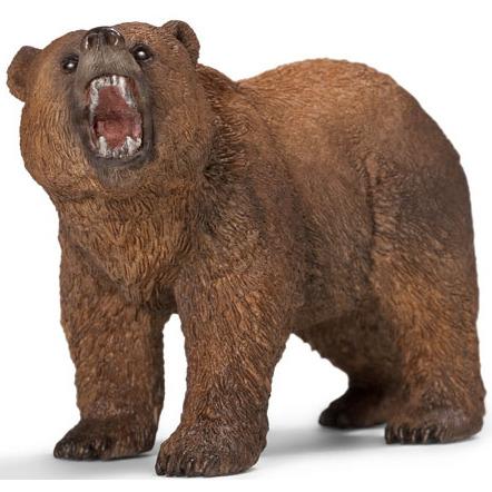 Mannelijke Grizzlybeer