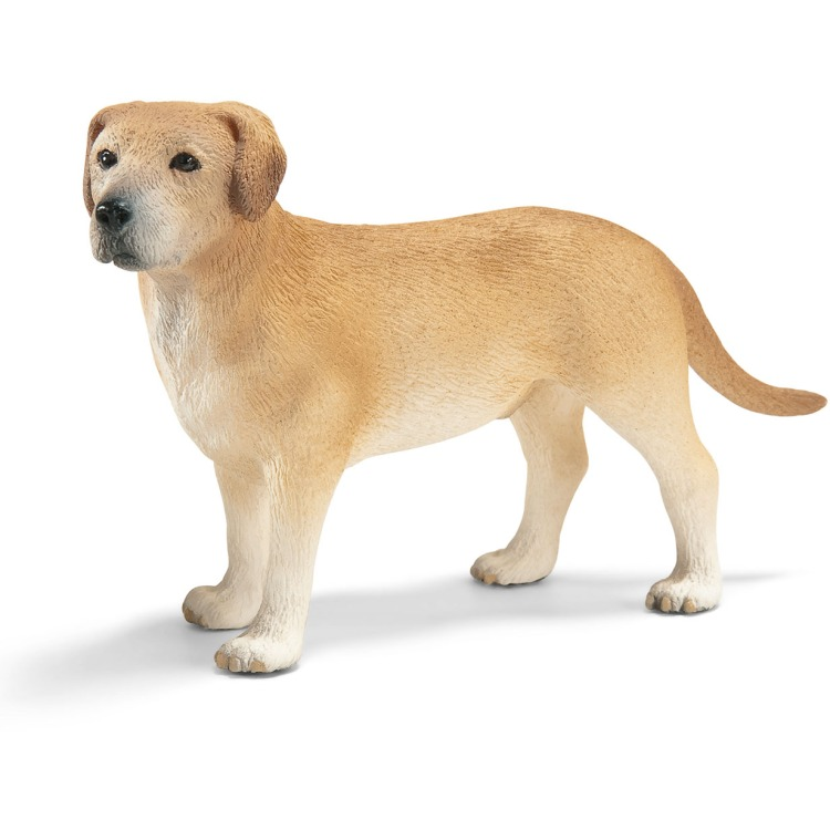Labrador Reu
