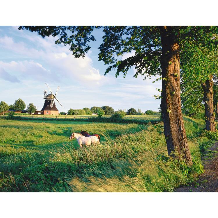 Ravensburger Paarden voor Windmolen (2000 stukjes)